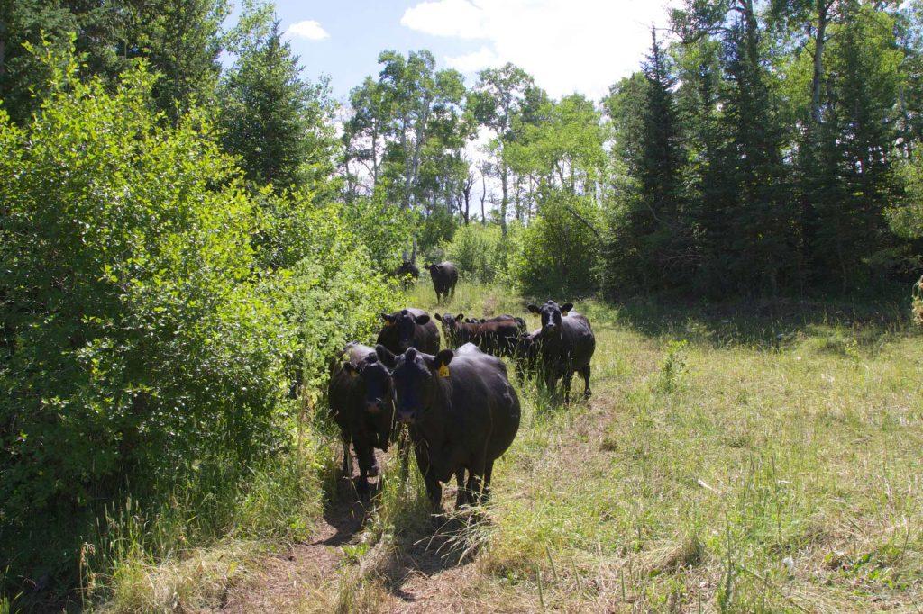 Bold J Ranch 12