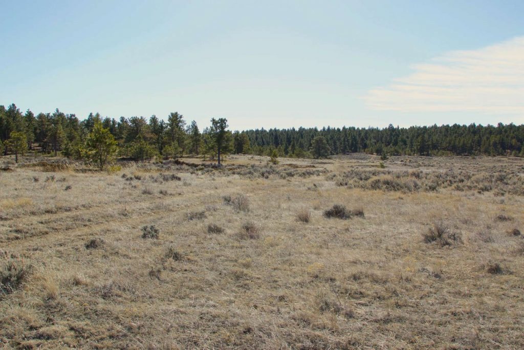 Ford Creek Pasture Unit 02