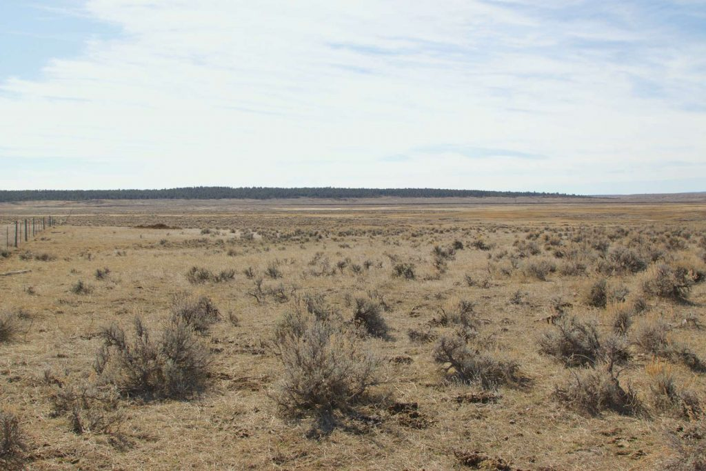 Ford Creek Pasture Unit 04