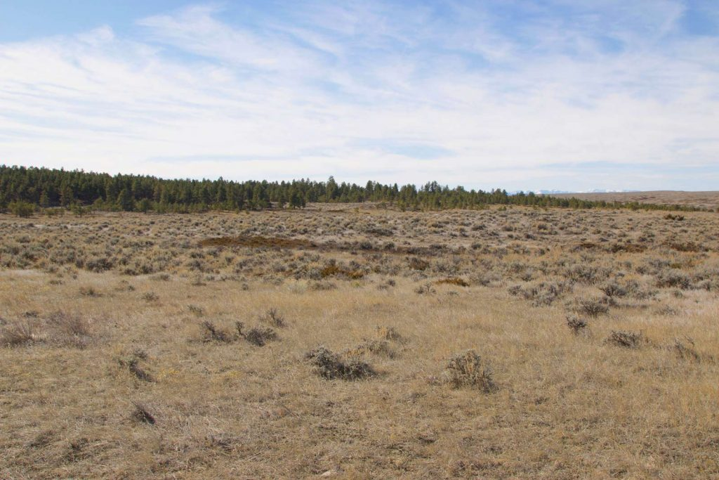 Ford Creek Pasture Unit 07