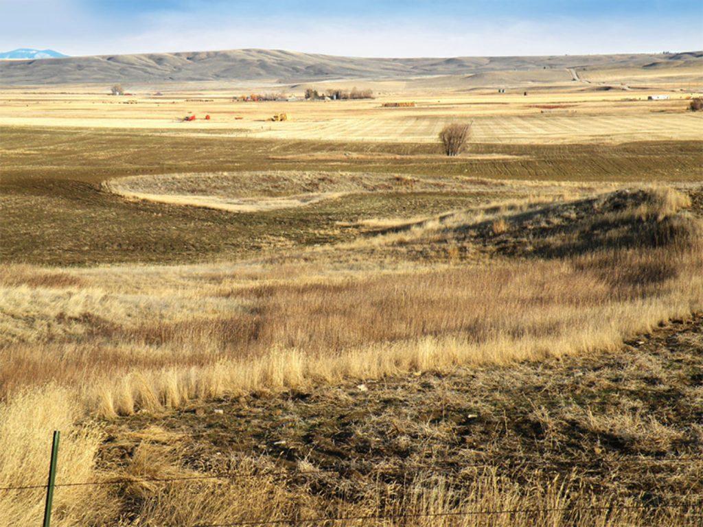 Judith Basin Farmland 01