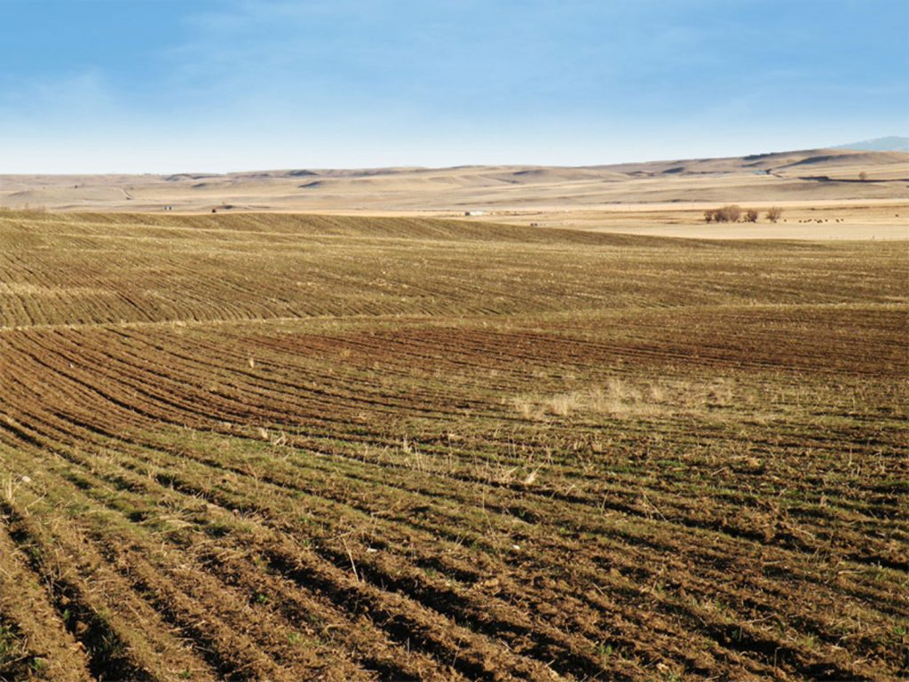Judith Basin Farmland 02