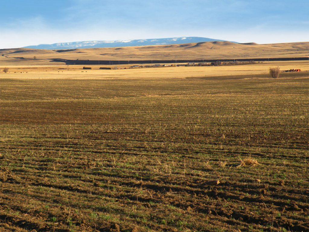 Judith Basin Farmland 03
