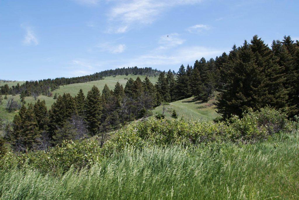 Mile High Ranch 20