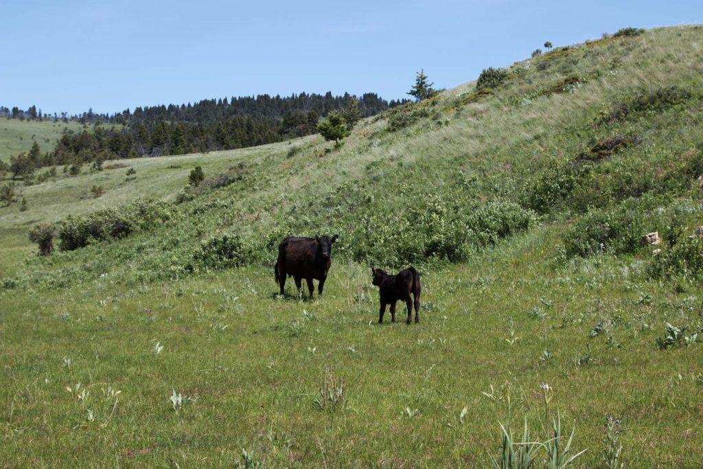Mile High Ranch 21