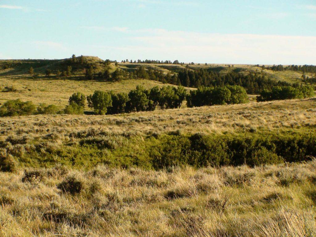 Teigen Ranch 06