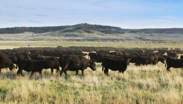 Teigen Ranch Feature