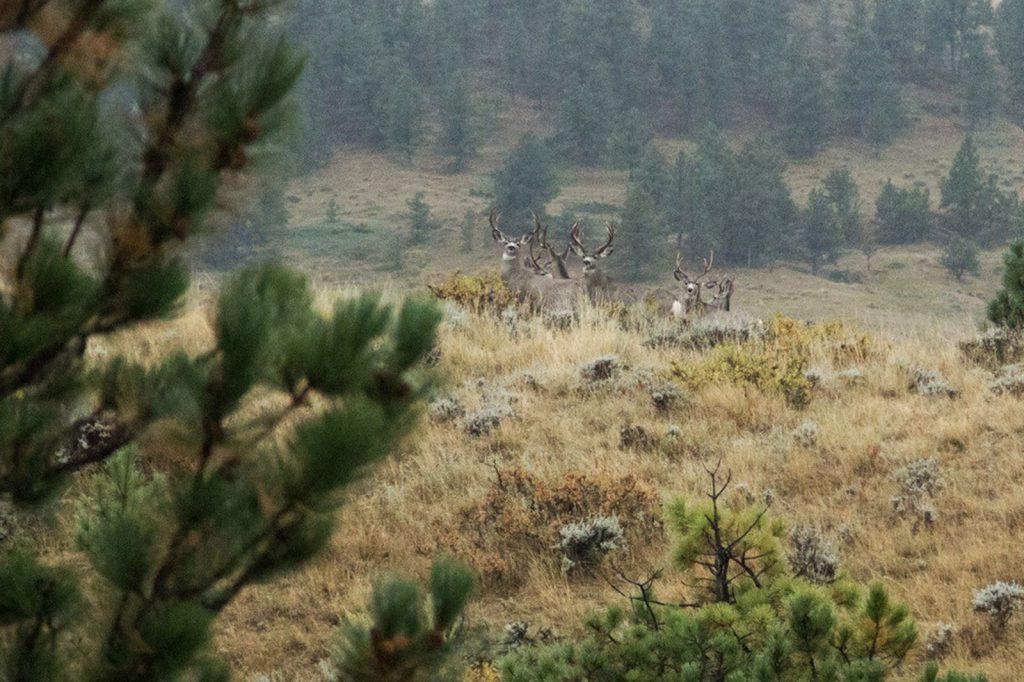 Teigen Ranch West 06