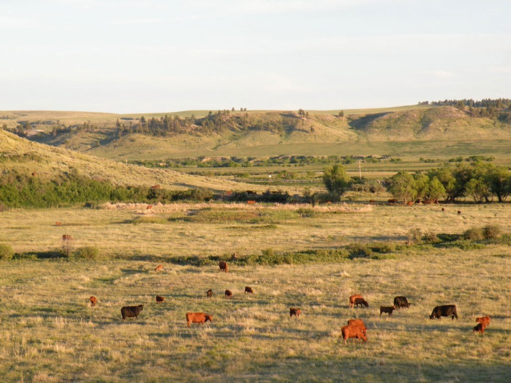 Teigen Ranch West 16