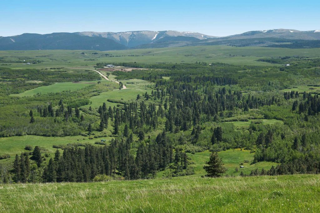 Snowy-Mountain-Trophy-Ranch-18