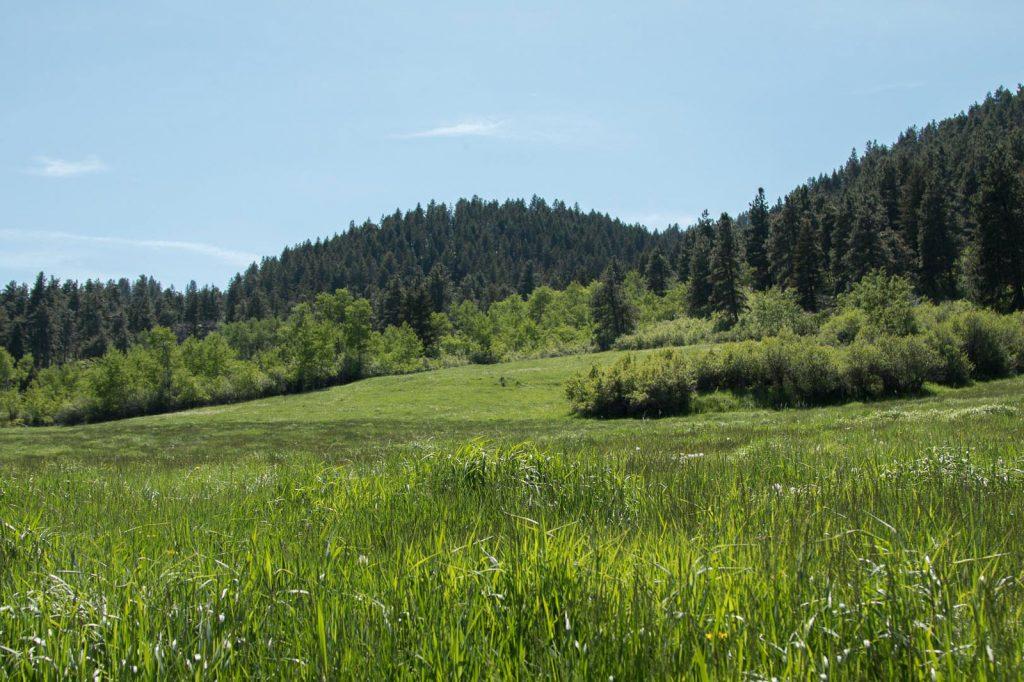 Snowy-Mountain-Trophy-Ranch-24