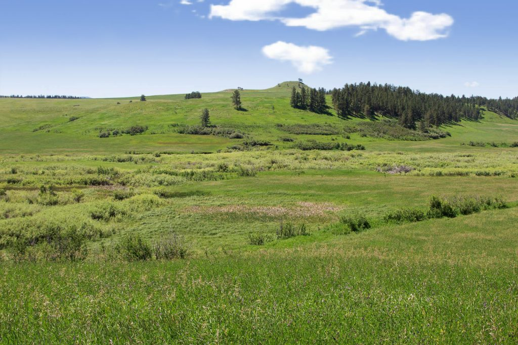 Forest Grove Ranch 05