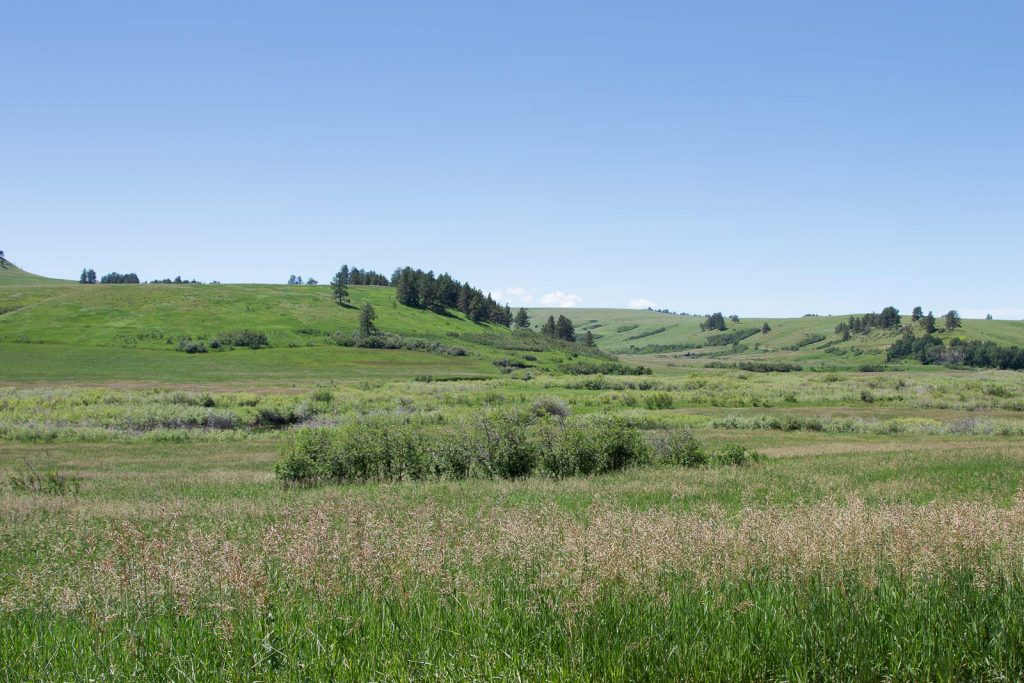 Forest Grove Ranch 07