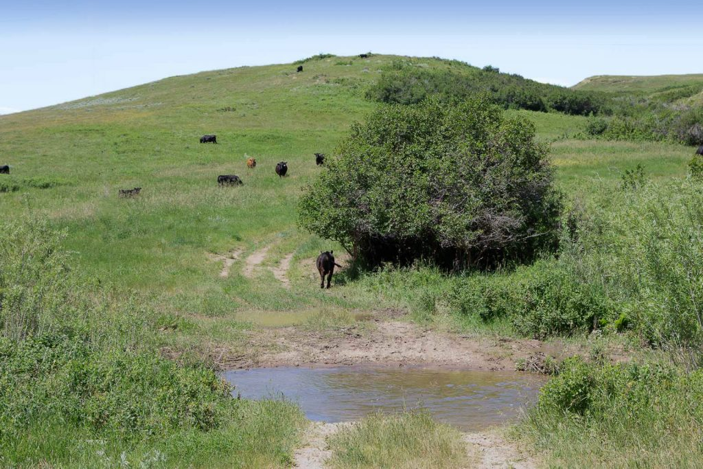 Forest Grove Ranch 11