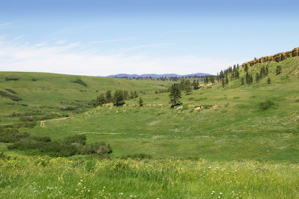 Forest Grove Ranch 14