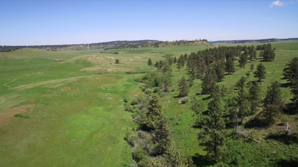 Forest Grove Ranch 17