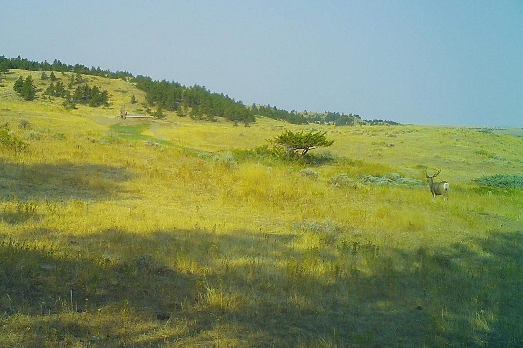 Teigen Ranch 33