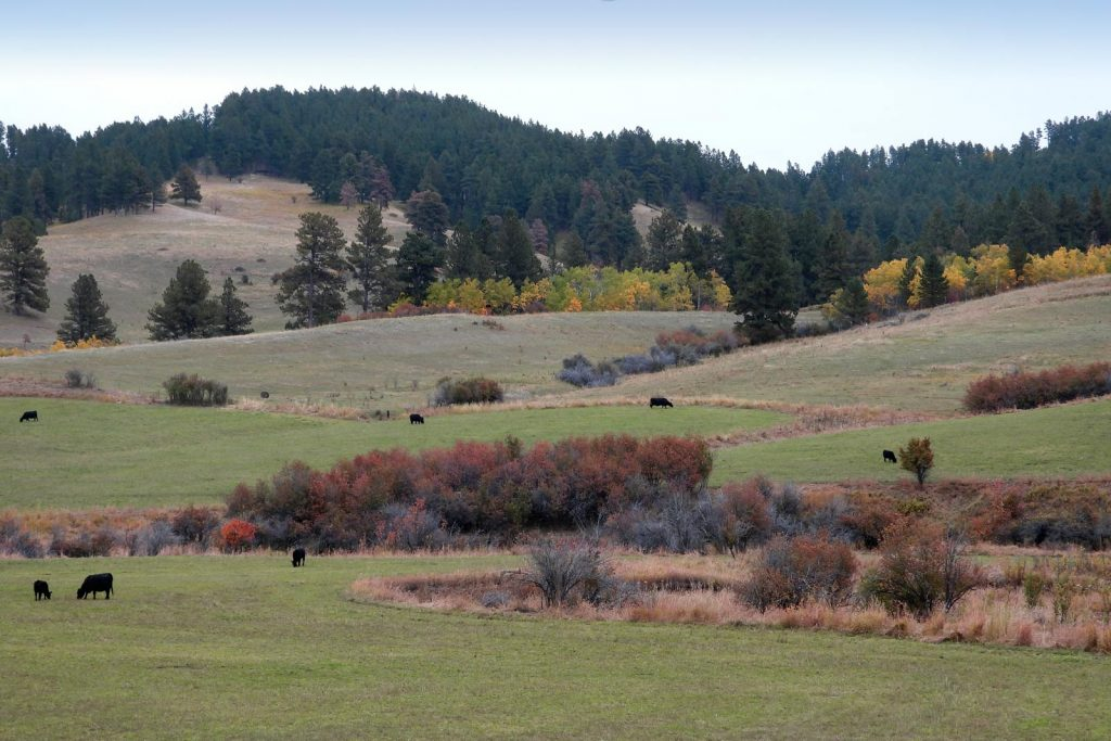 Castle Creek Ranch 22