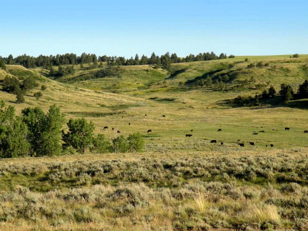 Paradise Coulee Ranch 06
